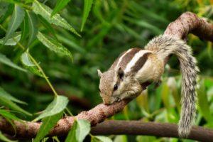 nature, Squirrel