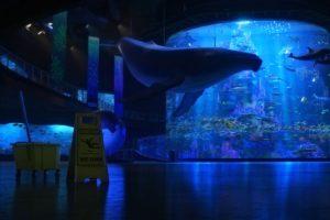 Finding Dory, Pixar Animation Studios, Disney Pixar, Movies, Animated movies