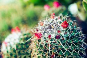 macro, Nature, Cactus