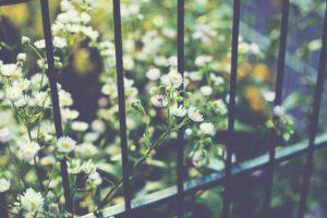 macro, Nature, Flowers