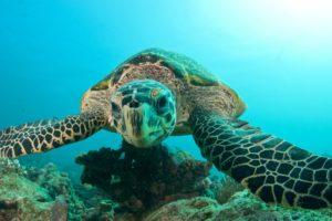 animals, Reptiles, Turtle