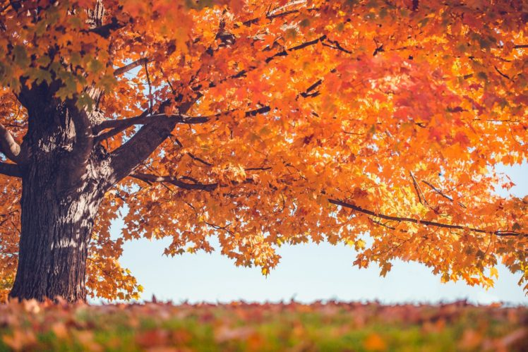 trees, Leaves, Fall HD Wallpaper Desktop Background