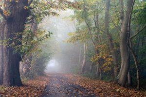 trees, Leaves, Fall