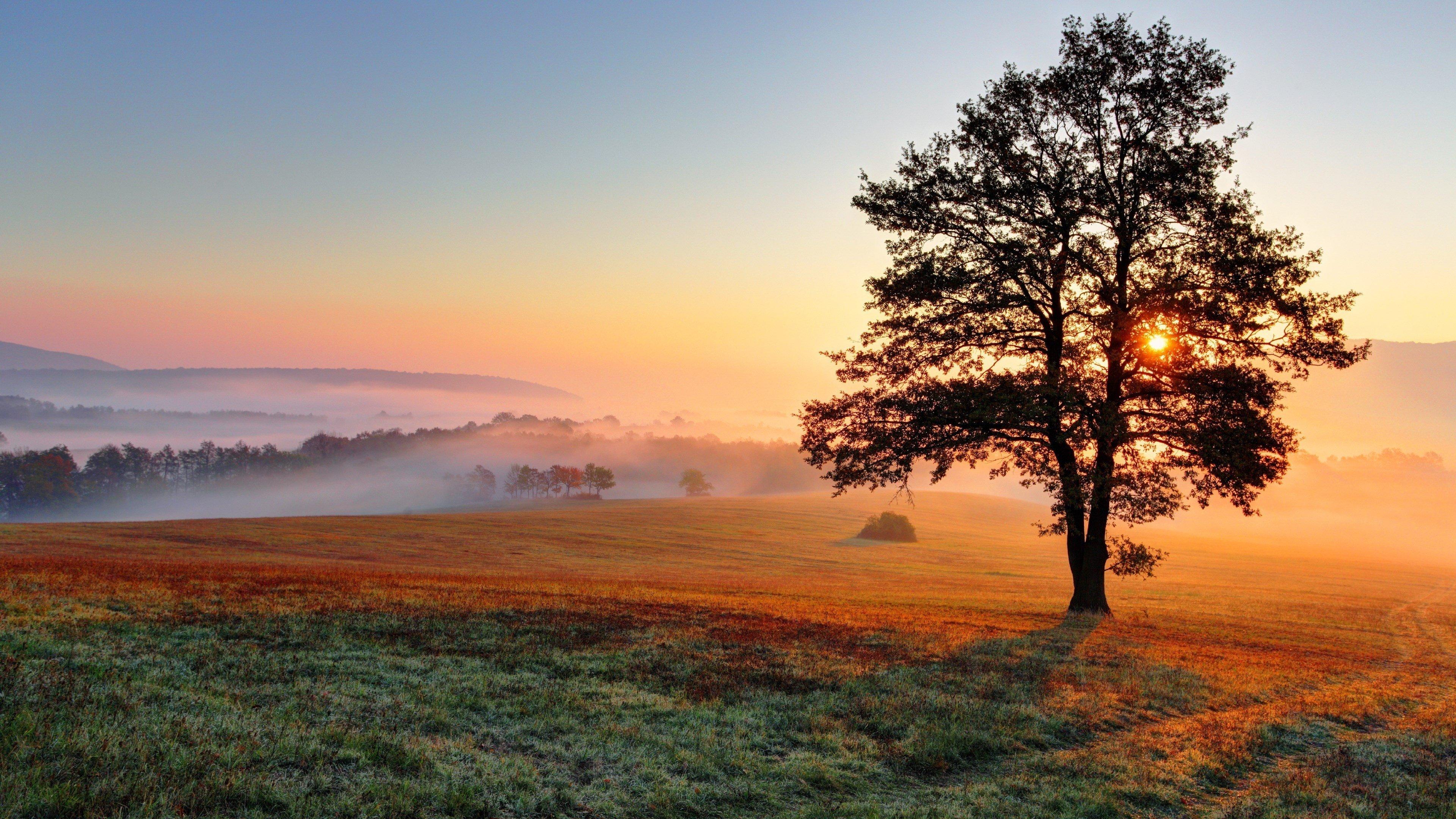 природа рассвет деревья  № 1158191 загрузить
