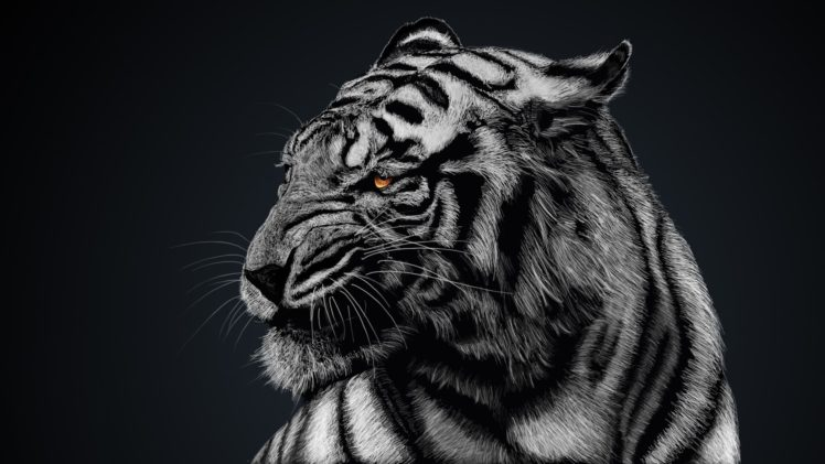 Super White Tigers Animals Nature Hd Wallpapers Desktop And Best Image Libraries Weasiibadanjobscom