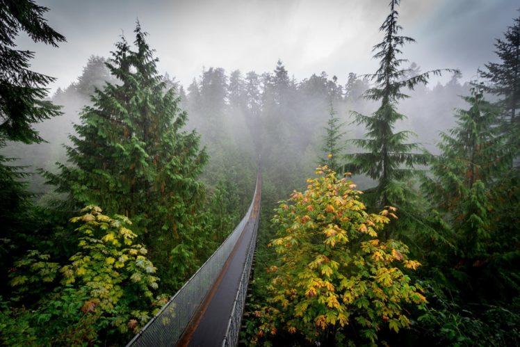 forest, Pine trees HD Wallpaper Desktop Background