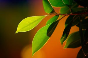 plants, Macro