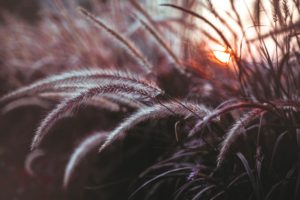 plants, Macro, Reeds, Depth of field