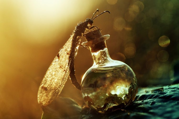 animals, Insect, Macro HD Wallpaper Desktop Background