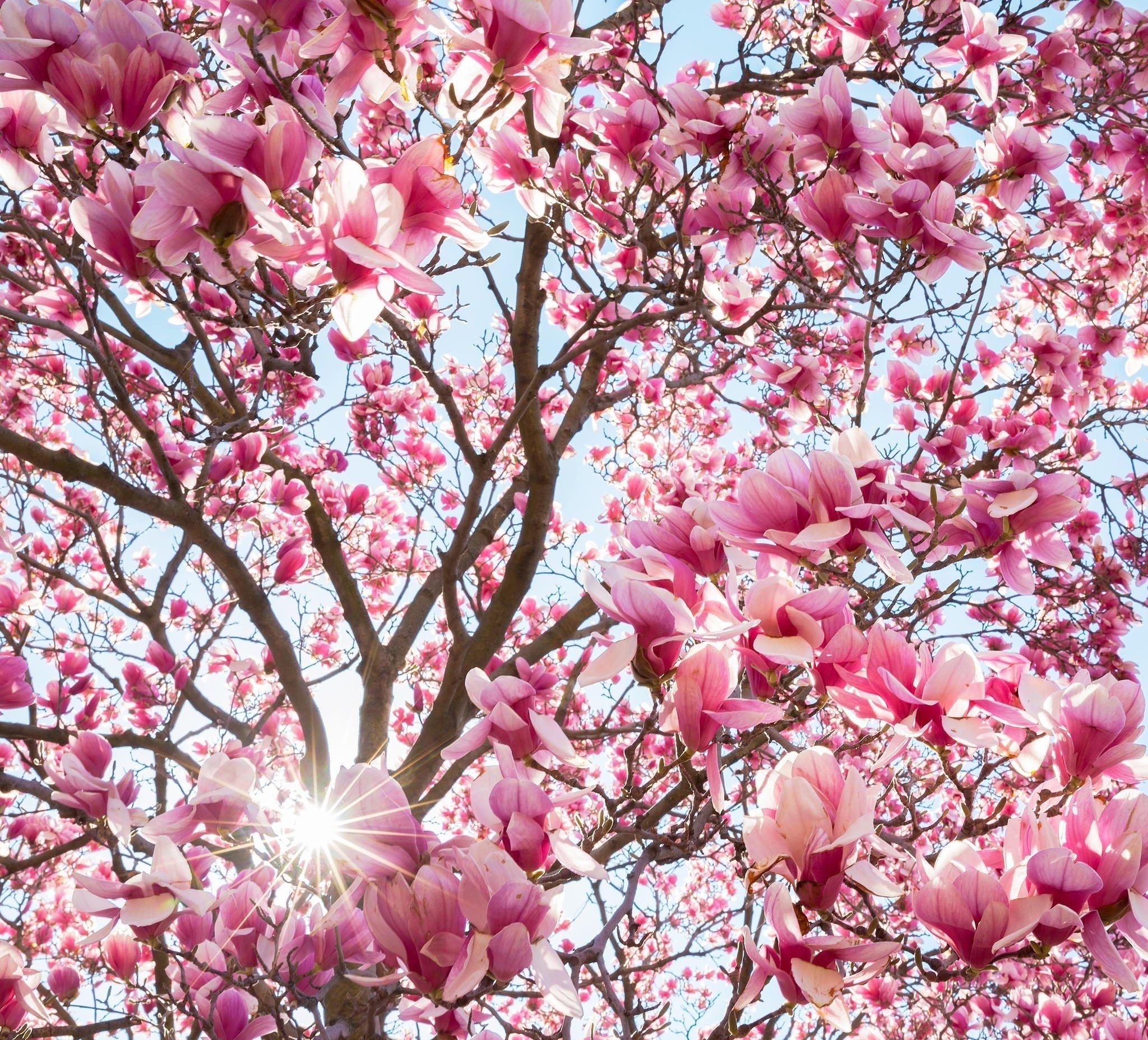 Опавшие лепестки цветения  № 3170410  скачать