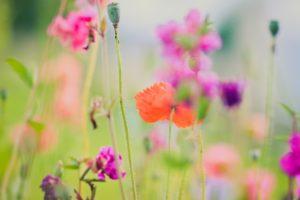 plants, Macro, Flowers