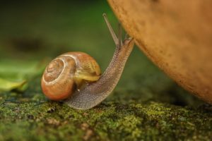 macro, Animals, Snail, Moss