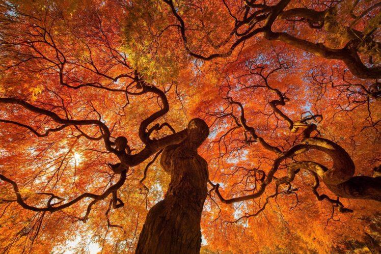 trees, Plants HD Wallpaper Desktop Background