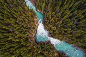 landscape, Trees, Forest, Nature, River, Water