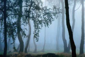 landscape, Trees, Forest, Mist, Nature, Grass, Leaves