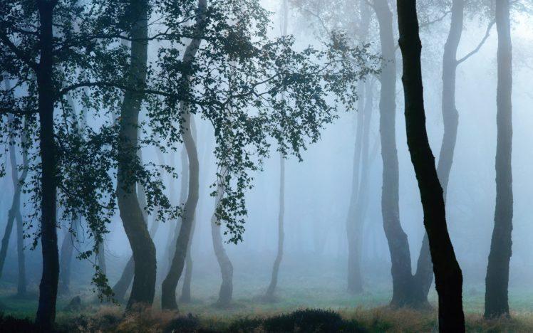landscape, Trees, Forest, Mist, Nature, Grass, Leaves HD Wallpaper Desktop Background