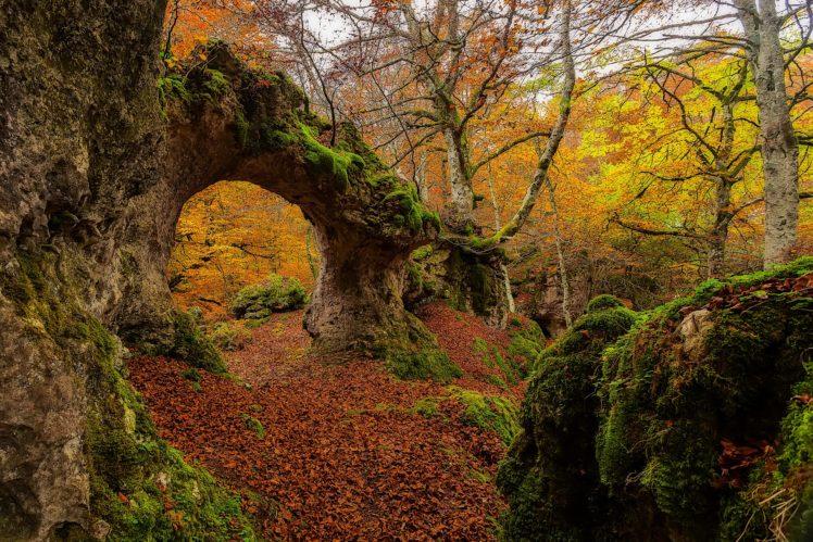 landscape, Moss, Forest HD Wallpaper Desktop Background