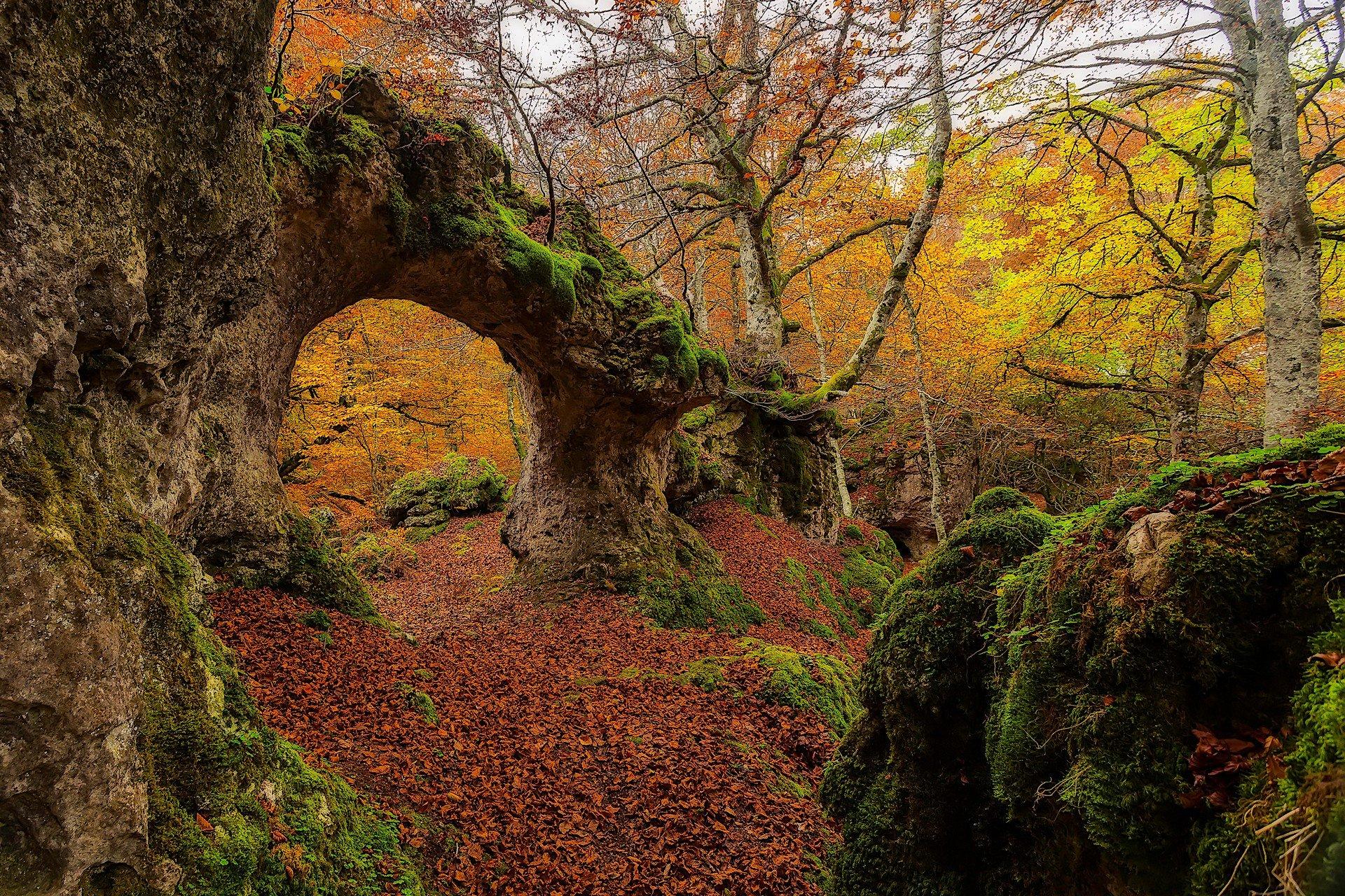 landscape, Moss, Forest Wallpaper