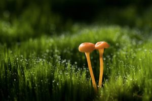 mushroom, Grass