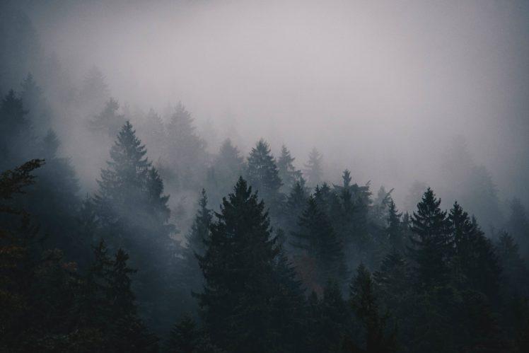 trees, Mist HD Wallpaper Desktop Background