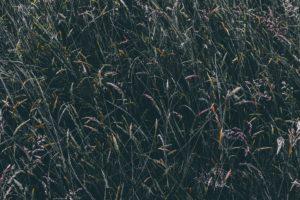 field, Plants
