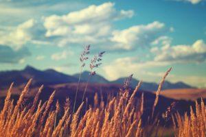 field, Grass, Sky, Plants, Clouds