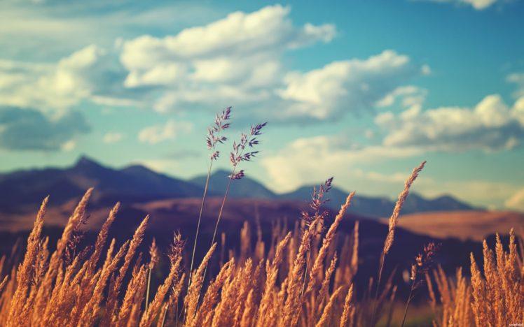 field, Grass, Sky, Plants, Clouds HD Wallpaper Desktop Background