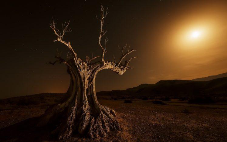 trees, Landscape, Nature HD Wallpaper Desktop Background