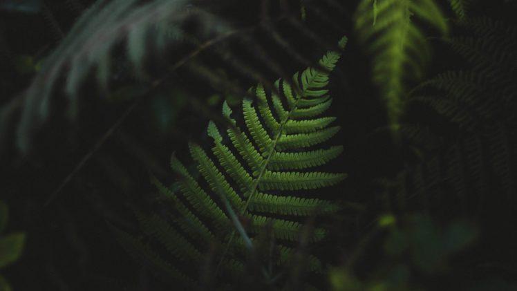 ferns, Plants, Green HD Wallpaper Desktop Background