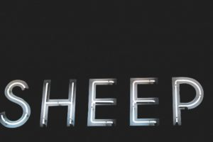 neon, Neon sign, Sheep