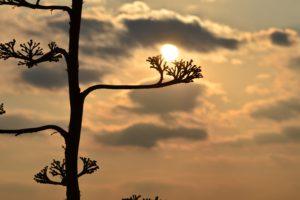 sunset, Landscape, Nature, Plants