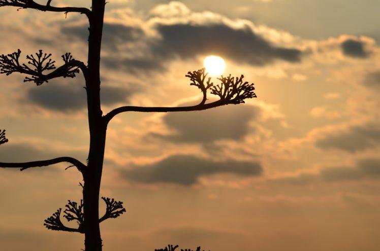 sunset, Landscape, Nature, Plants HD Wallpaper Desktop Background