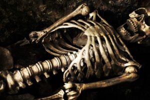 skeleton, Bones, Skull