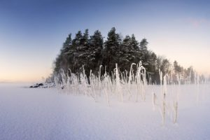 winter, Snow, Nature, Landscape, Trees