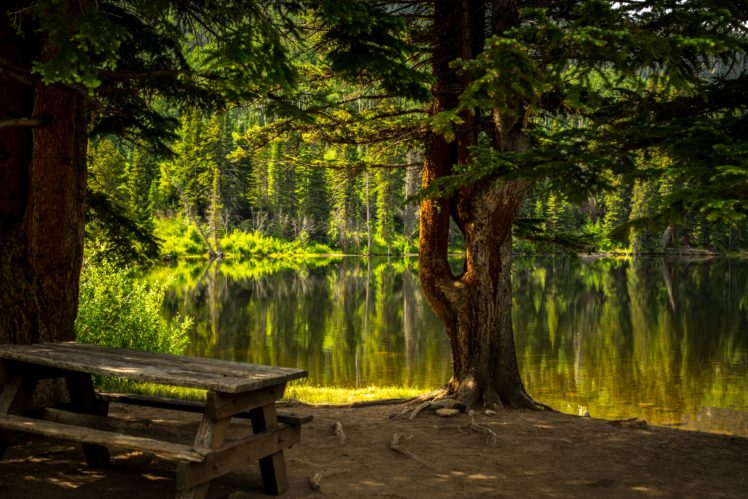 Nature Trees Forest Water Hd Wallpapers Desktop And Mobile Images Photos
