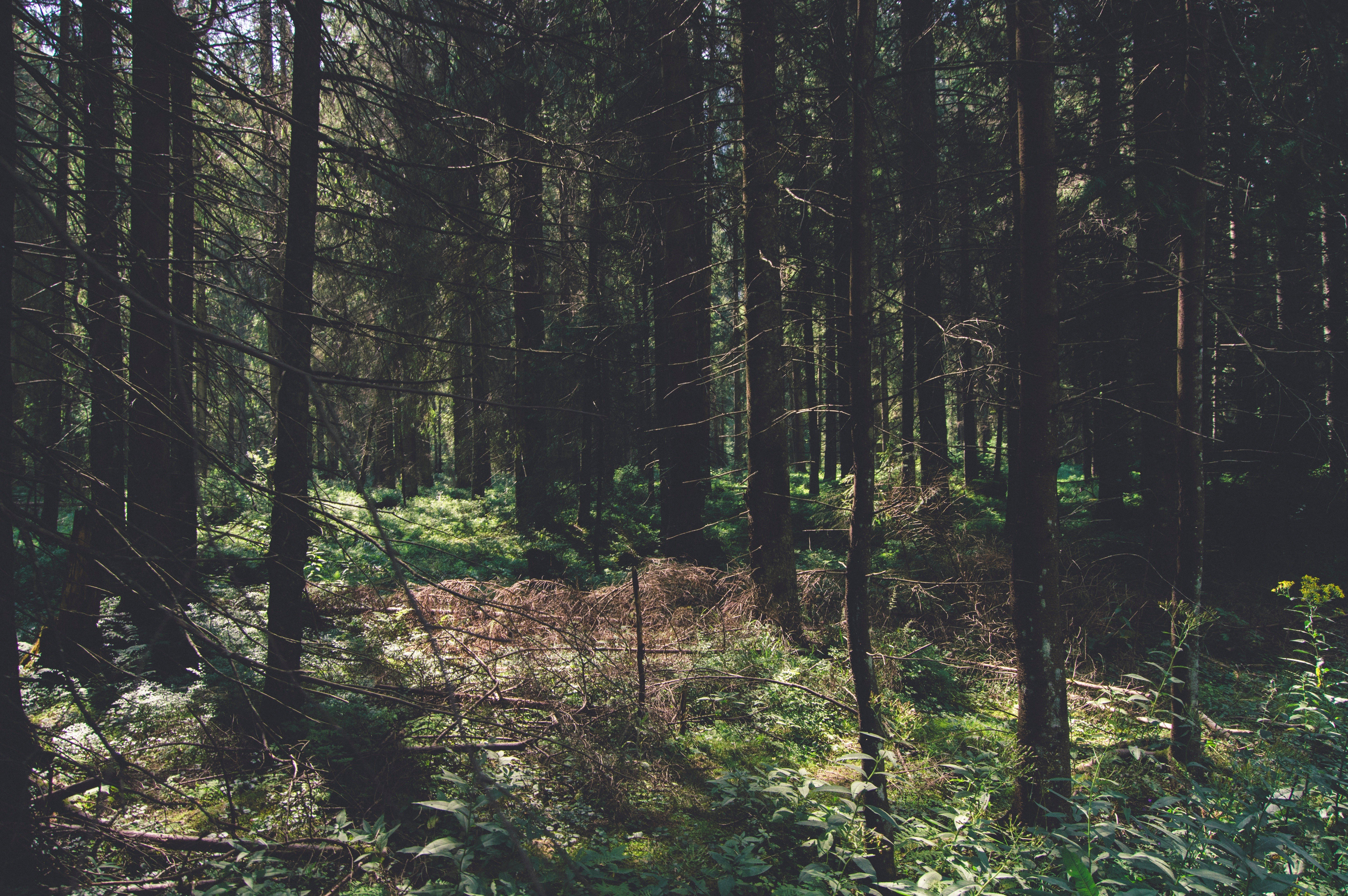 nature, Trees, Forest Wallpaper