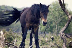 icelandic horses, Tree bark, Animals, Nature, Landscape, Long tailed tit