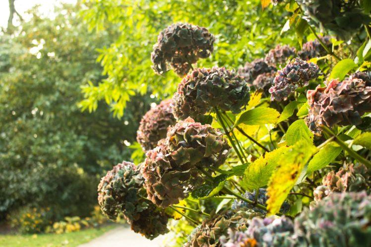 landscape, Nature, Photoshop, UK, Raw, The Lost Gardens Of Heligan HD Wallpaper Desktop Background