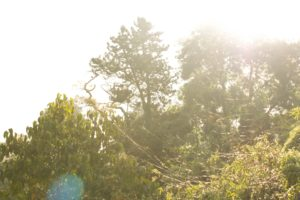 landscape, Nature, Photoshop, UK, Raw, The Lost Gardens Of Heligan