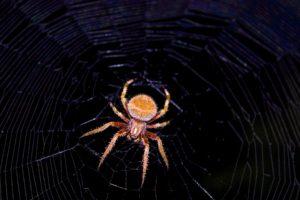 spider, Spiderwebs, Night