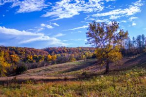 Baltimore, Cromwell Valley, Sycamore, Landscape, Fall, Nature, Clear sky, Daylight, Trees, Field, Grass