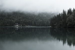 photography, Landscape, Pine trees