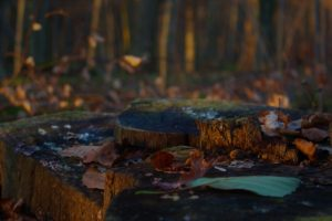 tree stump, Forest, Nature, Leaves, Macro