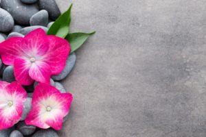 flowers, Stones, Plants