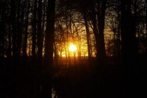 sunset, Nature, Forest, Tree bark, Evening