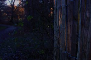 fence, Evening, Nature, Leaves