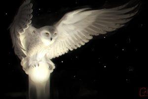 digital art, Owl