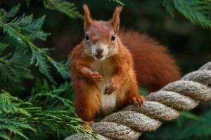 squirrel, Animals