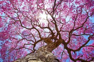 nature, Oak trees, Clear sky