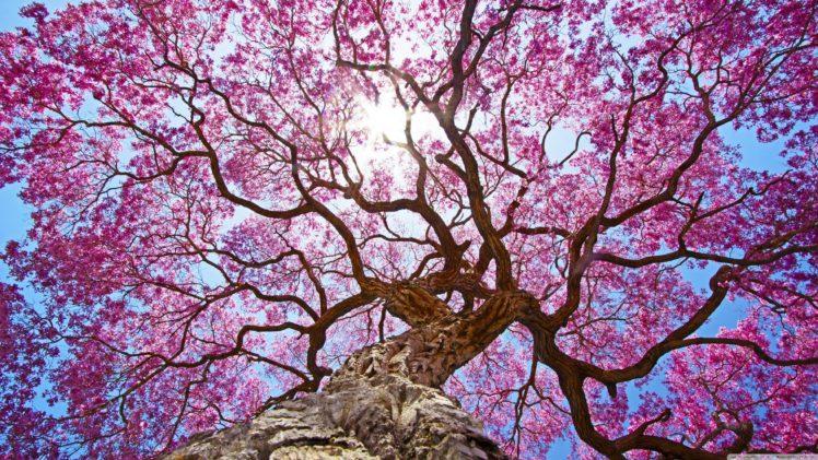 nature, Oak trees, Clear sky HD Wallpaper Desktop Background